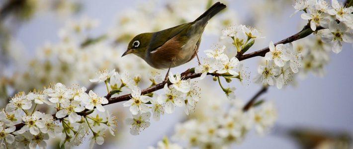 Äntligen är våren här!